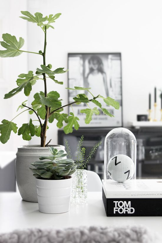 plantas_really nice things1