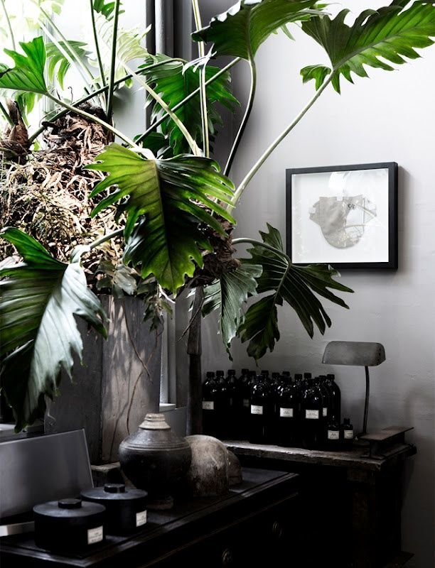plantas_really nice things3