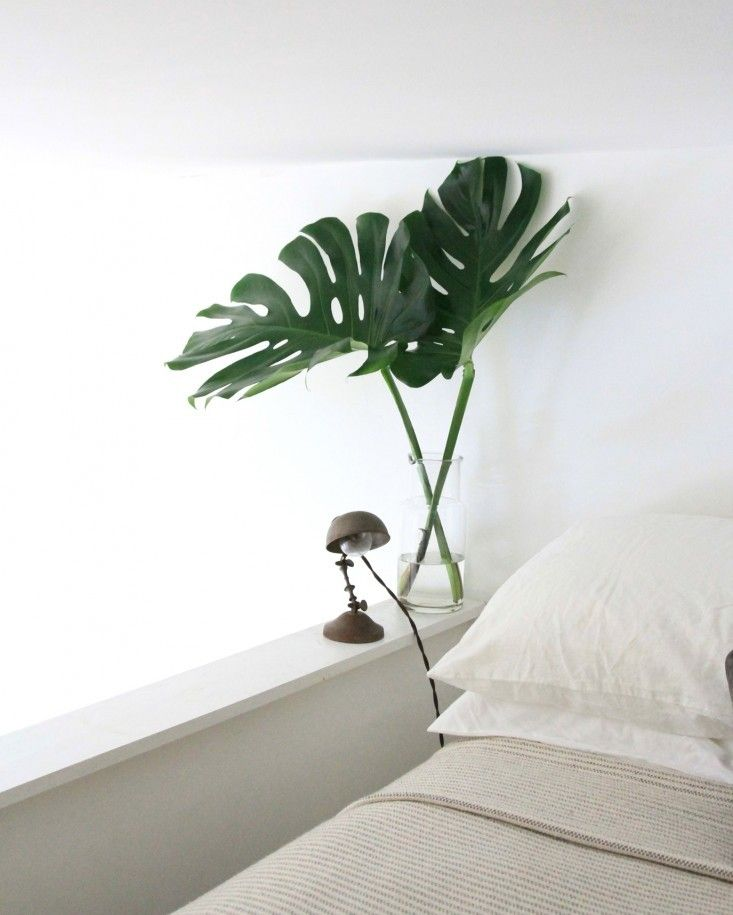 plantas_really nice things6
