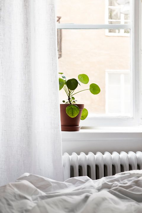 plantas_really nice things7